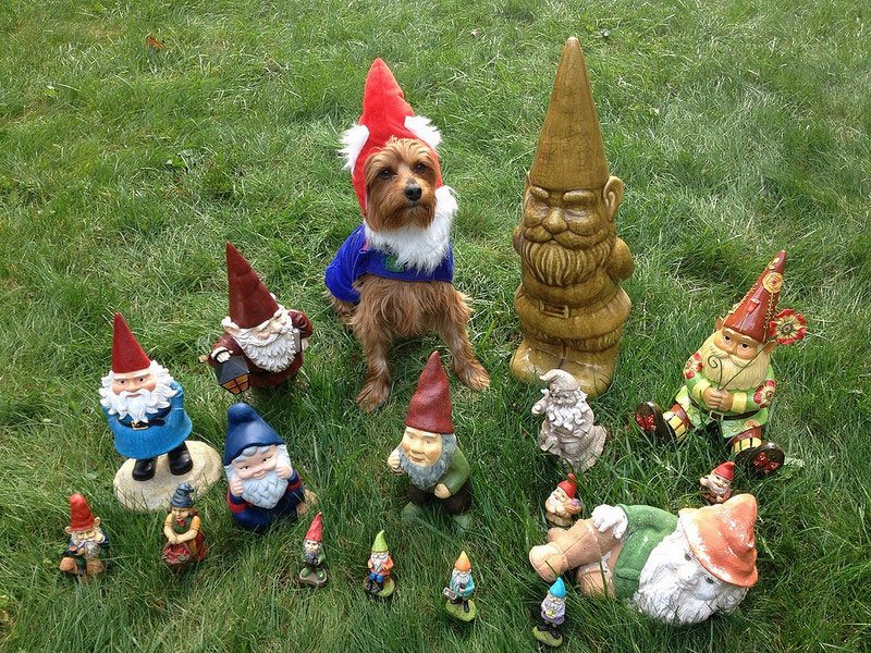 1. Garden gnome dog successfully infiltrates into the enemy ranks