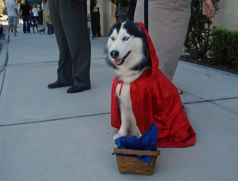 5. A dog in the costume of Red Riding Hood