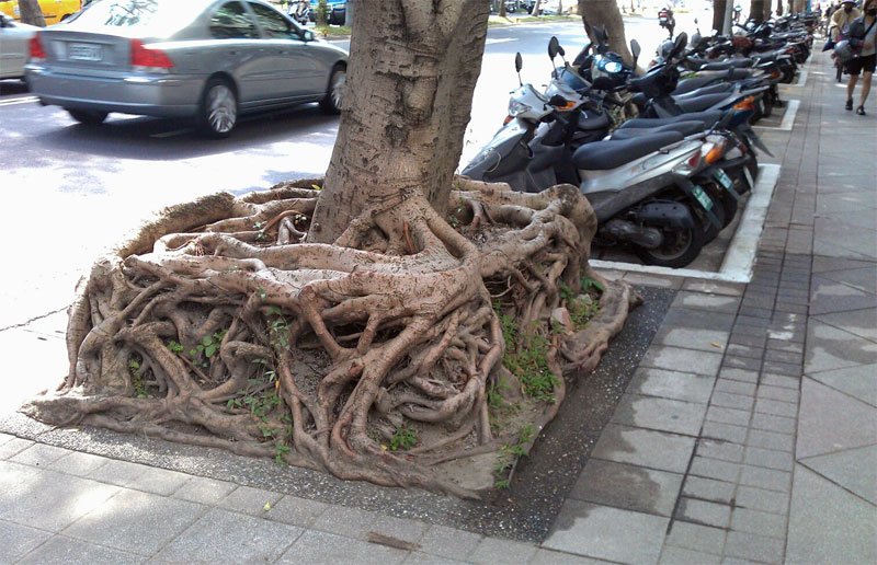 square-roots-3