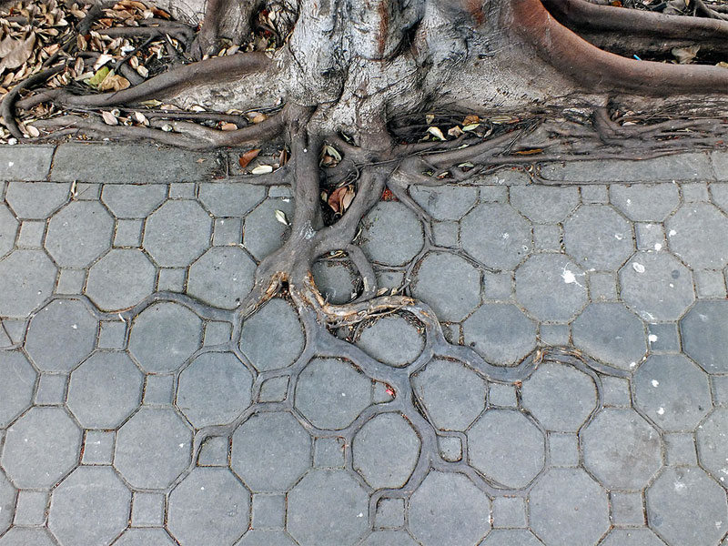 square-roots-4