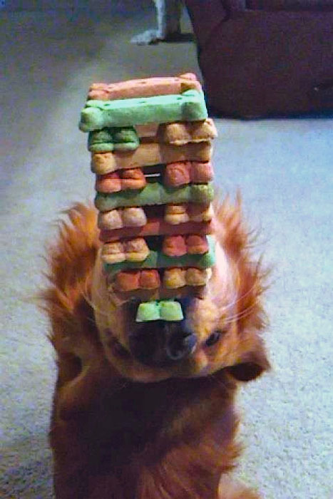 9. Treats balancing brought to the whole new level