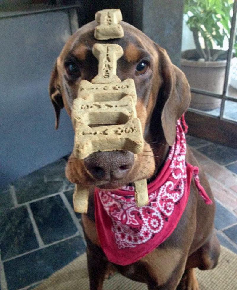 10. Stoic dog