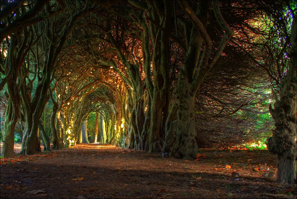 Tunnels from trees