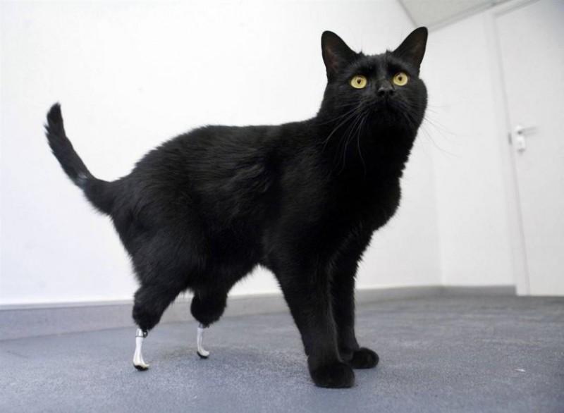 bionic_cat
