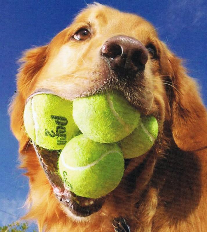 most_tenis_bals