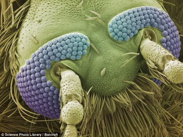Beauty under the microscope