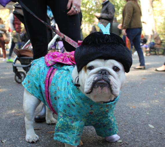 haloween_dog_parade_1