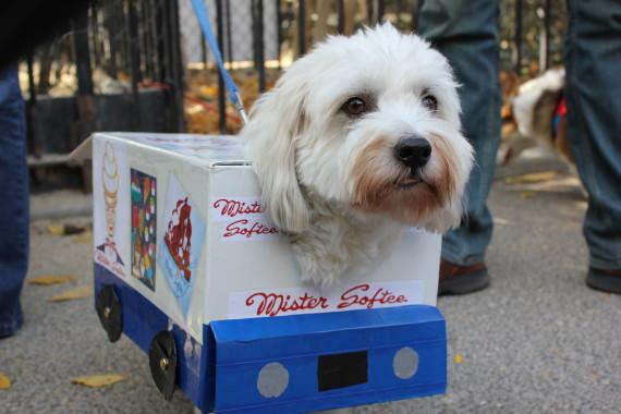haloween_dog_parade_10