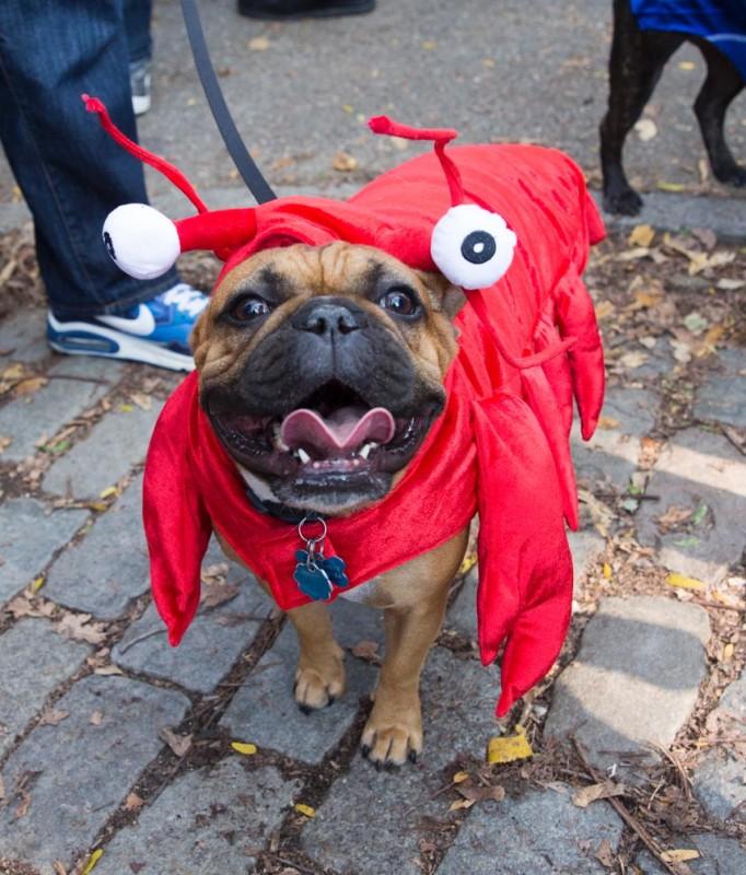 haloween_dog_parade_11