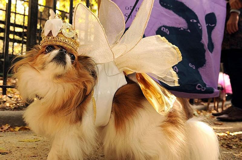 haloween_dog_parade_14