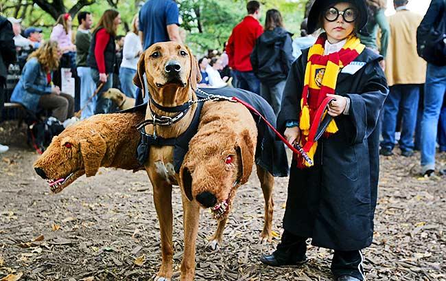 haloween_dog_parade_16