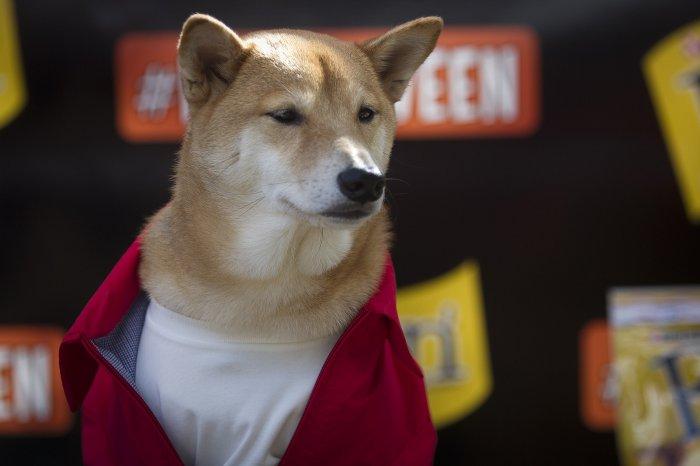 haloween_dog_parade_3