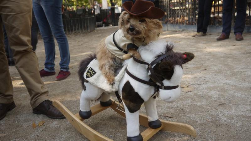 haloween_dog_parade_7
