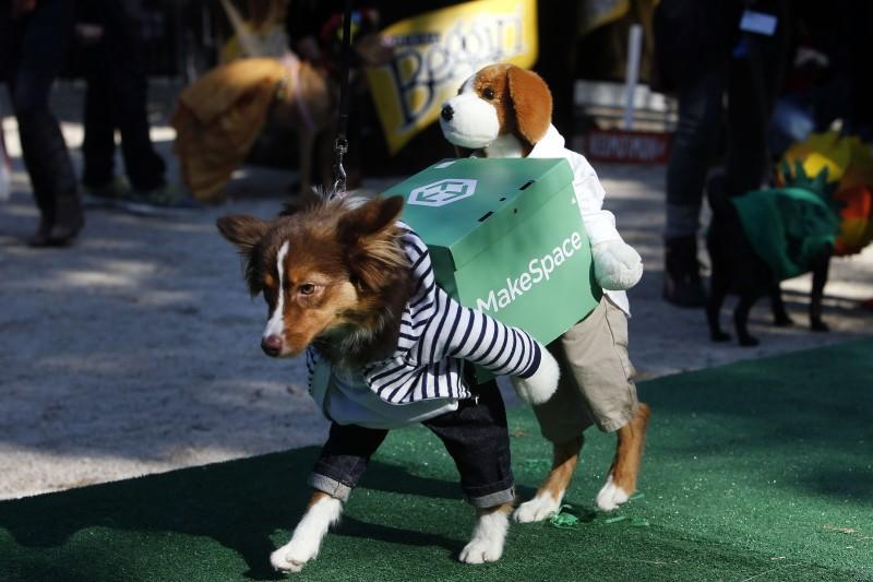 haloween_dog_parade_9