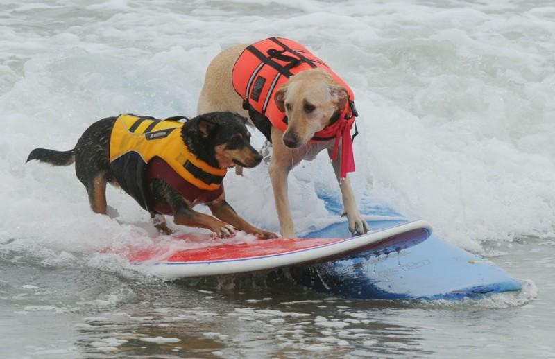 surf dog_01