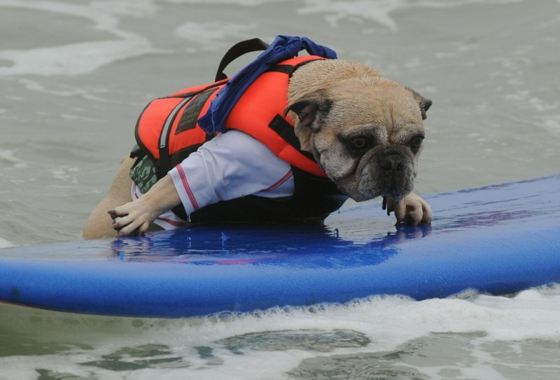 surf_dog_02