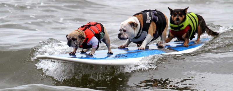 surf_dog_03
