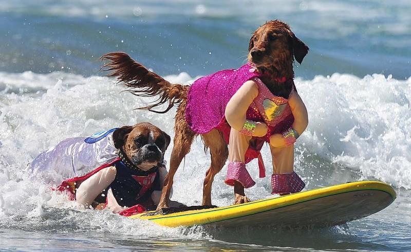surf_dog_04