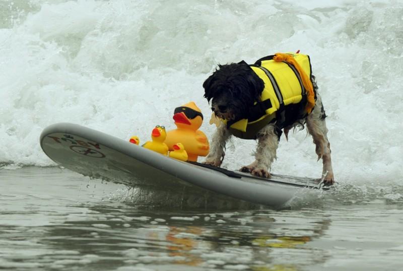 surf_dog_05