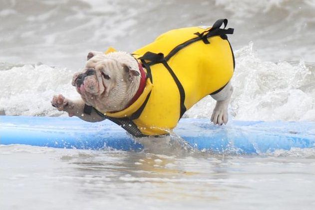 surf_dog_06