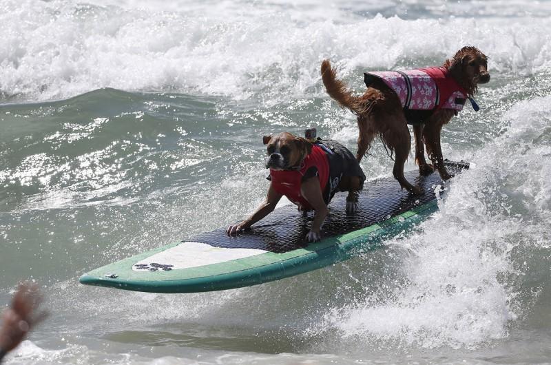 surf_dog_08