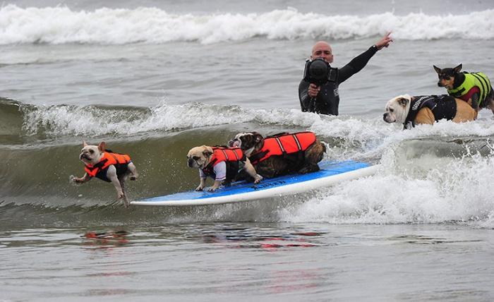 surf_dog_09