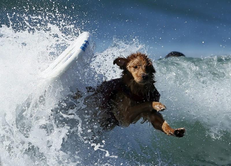 surf_dog_10