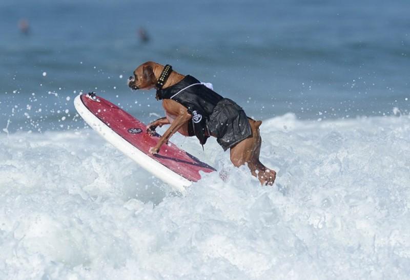 surf_dog_11