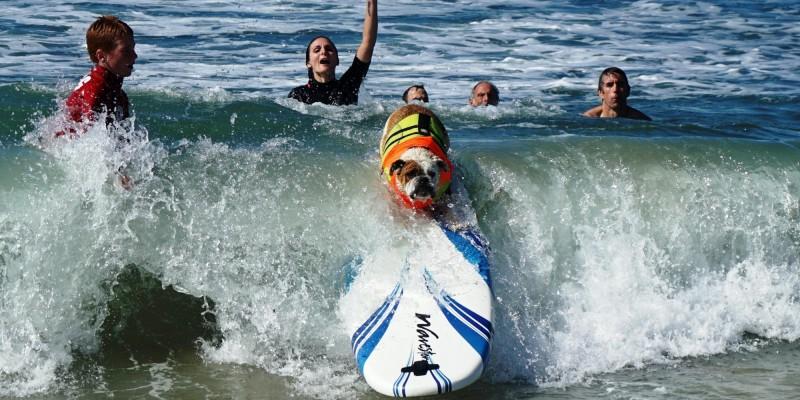 surf_dog_12