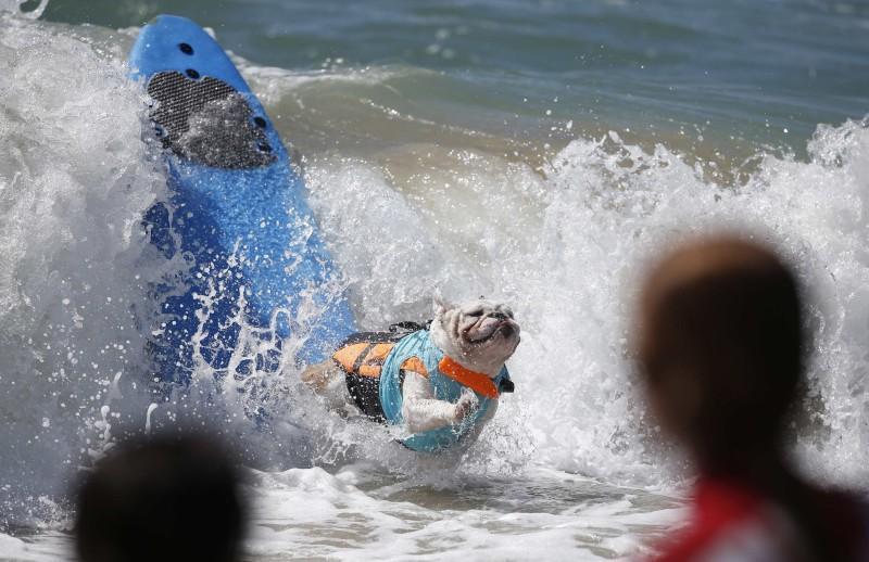 surf_dog_13