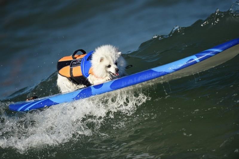 surf_dog_15