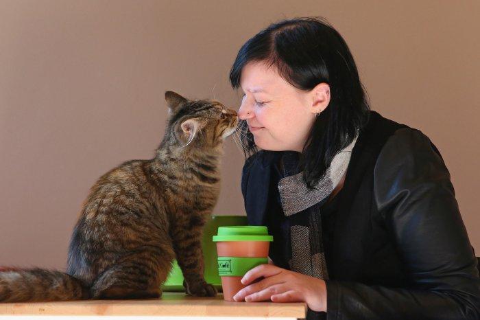 Cat Cafe Melbourne_1