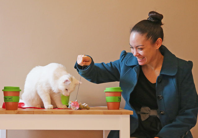 Cat Cafe Melbourne_6