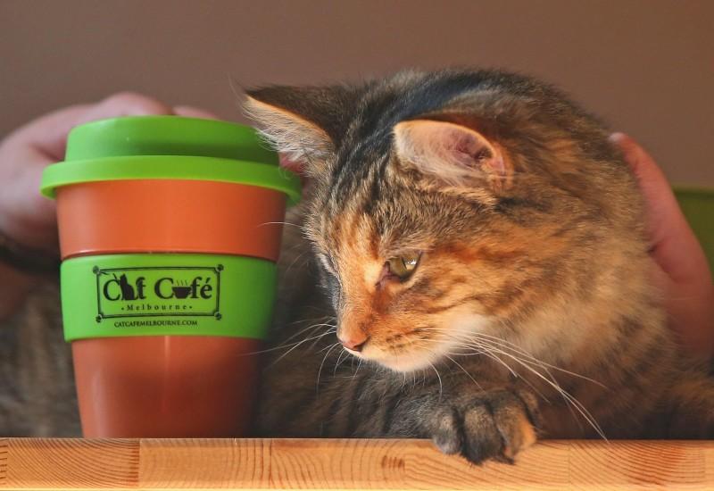 Cat Cafe Melbourne_8