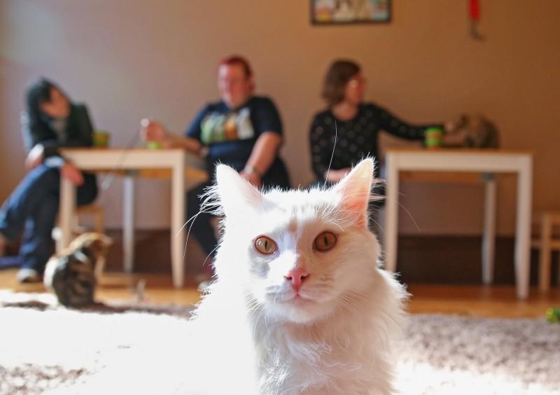 Cat Cafe Melbourne_9