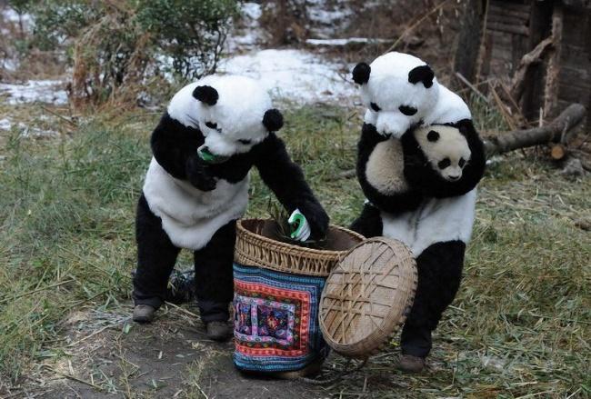 20 cute and lazy pandas