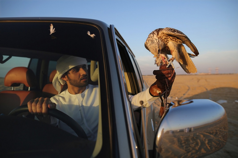 Falconry in the UAE