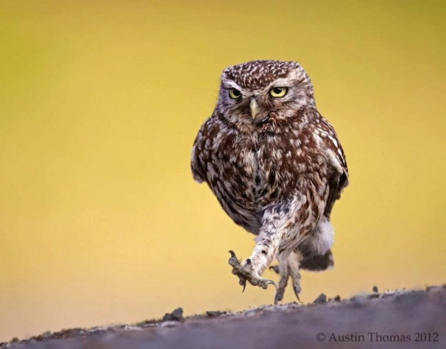 Owls are cool