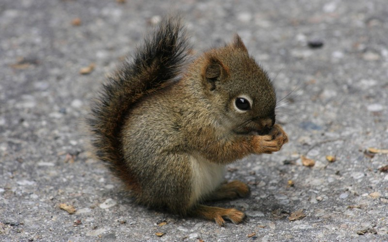 You might want to thank a squirrel the next time you enjoy the shade of a tree. Millions of trees are accidentally planted by squirrels that bury nuts and then forget where they hid them.