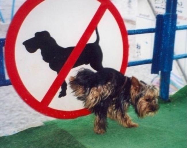 Violation of stupid rules