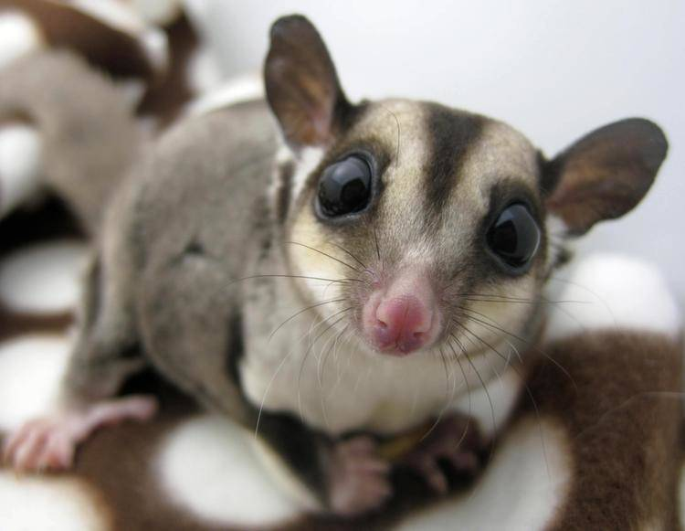 17 Unusual Pets That You Can Own