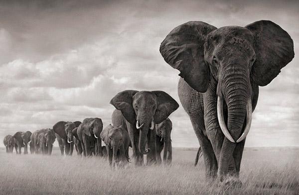 20 amazing black and white photos of animals