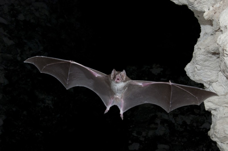 Bats are the only mammals that can fly, but wouldn't it be awesome if humans could fly too?