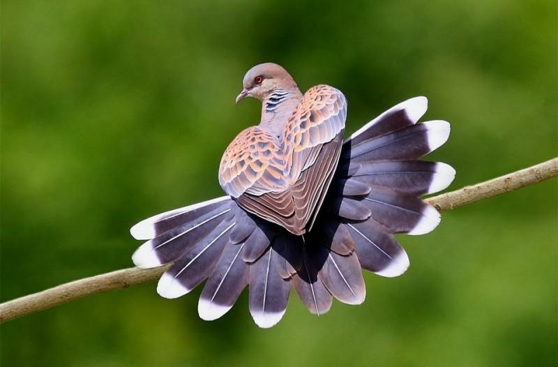 bird_10