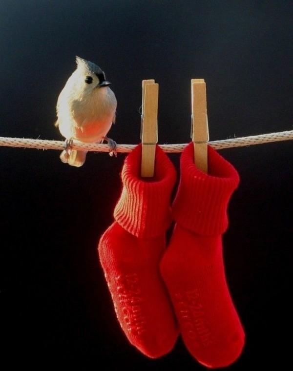 bird_17