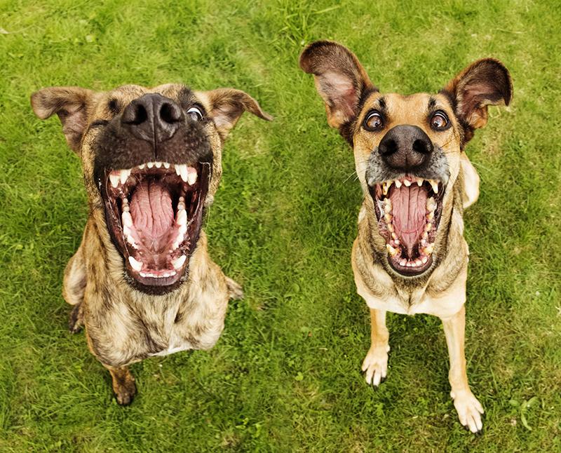 12 extraordinary dog portraits