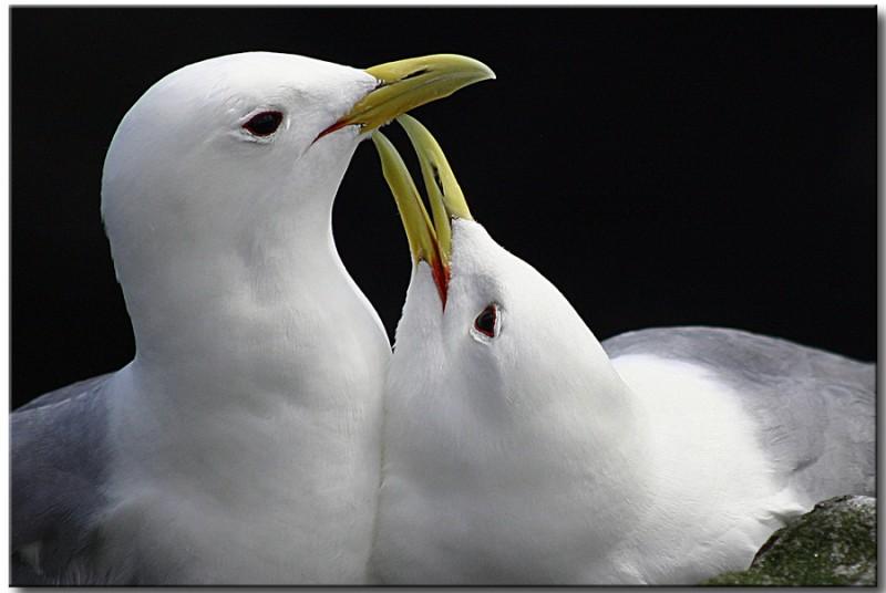 love_birds_10