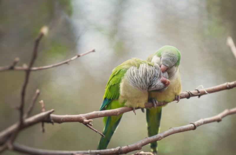 love_birds_12