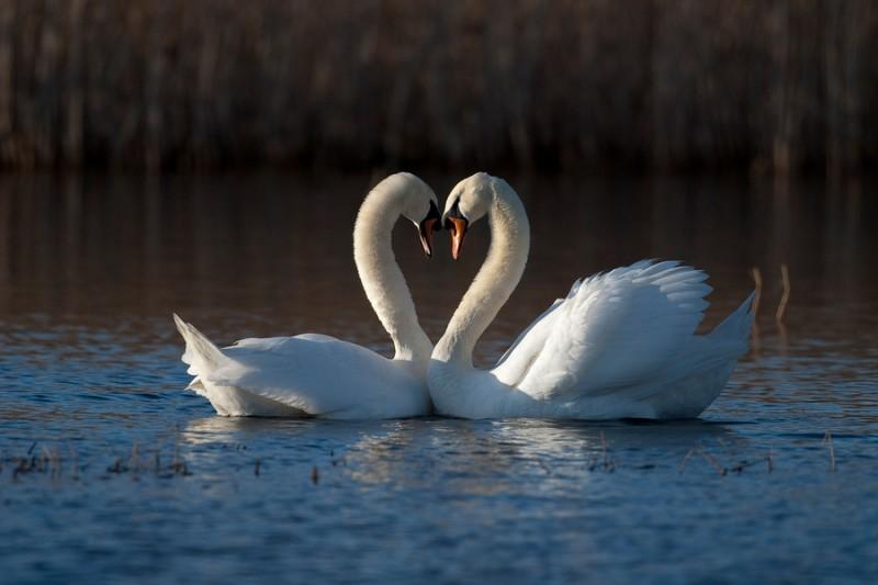 love_birds_3