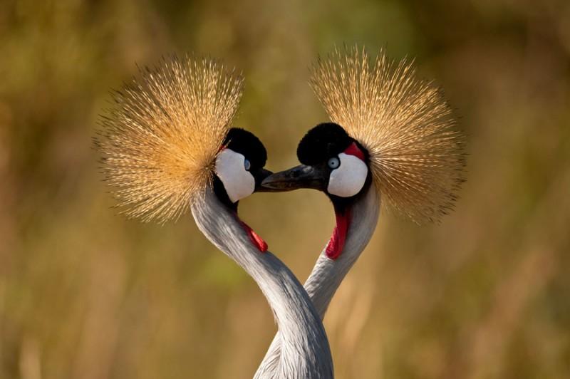 love_birds_4